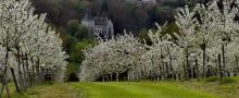 le château est entouré de fruitiers