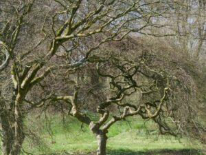 arbres curieusement tordus