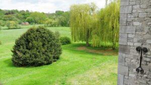 parc, bosquets et arbres